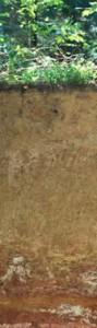 1,5 m Tiefe aufgegraben. Der rote Boden im Untergrund kann als überdeckte 'Terra rossa' bezeichnet werden, der italienische Begriff für rote Erde.Eine Seltenheit sind Böden auf der Schwäbischen Alb, bei denen im Untergrund die intensive rote Färbung erhalten blieb, wie sie sich früher unter tropisch- warmem Klima entwickelte.