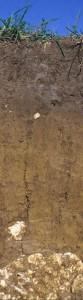 1m. Der typisch leuchtend gelb- braune und sehr tonige Boden der Schwäbischen Alb. Terra fusca, von 'terra', lateinisch für Erde und 'fusca', lateinisch für dunkelbraun.