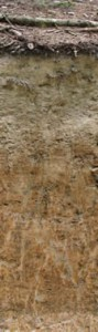 1,5m. Ein durch Stauwasser geprägter Boden in Süd- deutschland, mit besonders auffälliger Marmorierung. Pseudogley, 'pseudo' kommt aus dem Griechischen und steht für falsch, 'gley' heißt im Russischen Lehm und Ton.