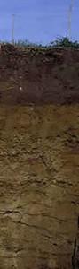 1.5m. Entstanden ist er eigentlich ganz ähnlich wie die typisch deutsche Parabraunerde. Allerdings entwickelte sich dieser hier in ausgesprochen sandigem Ausgangsmaterial, das Quarz und sonst nicht viel enthält. Deshalb haben sich anstatt einer mächtigen Tonanreicherung viele dünne Zebrastreifen oder eben Bänder entwickelt. Das ist dann doch kein Zebraboden, sondern eine Bänder- Parabraunerde. Dabei ist wenigstens klar, wie die Parabraunerde zu den Bändern im Namen kam.
