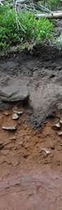 1 m. Hier wurde nicht nur das rötliche Eisen verlagert, sondern auch der schwarze Humus reichert sich in einem zackeligen Band an. Kein Wunder, denn dort wo dieser Boden im Schwarzwald entwickelte, ist das Ausgangsgestein ziemlich sandig, also sehr wasserdurchlässig. Zudem regnet es dort sehr viel. So nimmt es auch nicht Wunder, dass dieser Boden an Nährstoffen für die Pflanzen verarmt ist. Das hat aber auch sein Gutes - zumindest für die Pflanzen, die mit wenig auskommen und hier nicht vom Allerweltsgrün, wie fetten Wiesen oder Brennnesselfluren verdrängt werden. Auch der Name dieses Bodens hat russische Wurzeln. 'Pod' heißt 'unter' und und 'zola' ist das Wort für 'Asche'. Das Bild zeigt es, der Boden sieht tatsächlich aus wie unter Asche - sieht aber nur so aus.