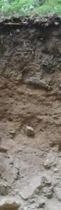 1m. Kann der Regen gut versickern, kommen im Schwarzwald auch schwarz- braun- weiße Böden vor: SCHWARZ durch den vielen Humus, der sich im kühlfeuchten Klima anreichert BRAUN färben Eisenminerale, die sich im Boden bilden WEISS ist die Eigenfarbe des Ausgangsgesteins. Eine Braunerde, ein Begriff, der sich selbst erklärt.