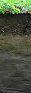 2 m. Eigentlich steht hier immer Wasser, zumindest unterhalb von 1 m Tiefe. Dort ist das im Boden vorhandene Eisen bläulich gefärbt, oberhalb davon - dort wo ab und zu doch Sauerstoff vorhanden ist - treten Rostflecken auf. Wie bei den meisten Böden ist der humose, lockere und gut belüftete Oberboden braunschwarz gefärbt. Dieser durch das Grundwasser gepägte Böden heißt schlicht und einfach 'Gley'. Das russische Wort bezieht sich wohl auf die abdichtende Wirkung von 'Lehm und Ton', über dem sich Grundwasser bilden kann.