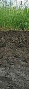 """1,2 m Tiefe aufgegraben. Der hohe Tongehalt ist ausschlaggebend für diesen Boden. Dadurch ist er entweder trocken und steinhart oder naß und schmiert wie Klebstoff. Solche Böden quellen bei Nässe und schrumpfen bei Trockenheit. Dadurch gliedert sich ein Boden in Gefügeelemente.  Für die Pflazenwurzeln sind die Nährstoffe im Inneren dieser Element oder """"Aggregate"""", die beispielsweise Prismenform annehmen können, verloren. So hilft es auch nicht viel, dass diese tonigen Böden meist eigentlich sehr nährstoffreich sind. Beim Pelosol standen die Griechen mit ihrem 'pelos' für Ton und Lehm zusammen mit den Lateinern Pate. Die Lateiner steuerten dann zur Bezeichnung dieses Bodentyps ihr 'solum' für Boden bei."""