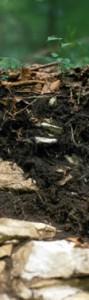 0.3 m aufgegraben. Hirnschale des Teufels nennt der Volksmund diese Böden der Schwäbischen Alb, die auch nach über 10.000 Jahren Bodenentwicklung noch nicht viel mehr als 15 cm mächtig sind. Das ist eine Rendzina, vom polnischen Wort für 'Rauscheboden'. Damit wird Bezug auf das Geräusch beim Pflügen dieser steinigen Böden genommen.