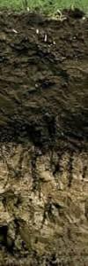1,1 m. Kalte Winter und heiße trockene Sommer, die den raschen Abbau von Pflanzenresten behindern und ein zum Graben einladendes Ausgangsmaterial, das sind die Voraussetzungen für die Entstehung der äußerst fruchtbaren Schwarzerde. Der mächtige Oberboden dieser Steppenböden entsteht durch fleißiges Graben und Mischen durch Regenwürmer, Hamster und Zwiesel. Tiefe Grabgänge im Unterboden füllen sich dann manchmal mit dunklem Oberboden. Diese dunkle Röhren vor hellem Boden werden Krotowinen genannt. Tschernosem oder Chernozems kommt aus dem russischen, im deutschen heißen diese Böden Schwarzerden. Neben der Verbreitung in den großen amerikansichen und russischen Steppen treten sie auch als Relikt in den Börden um Braunschweig und Magdeburg auf. Auch im Raum um Halle und im Marchfeld in Österreich sind sie zu finden.
