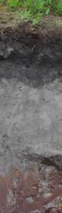bis 1m. Der schwarz- weiß- rote Boden entstand dort im Schwarzwald, wo der hohe Niederschlag nicht abfließen kann und der Boden so fast das ganze Jahr nass ist. Korrekt wird der Boden als Stagnogley bezeichnet - ein Kunstwort, das von stagnieren und vom russischen 'gley', für Lehm und Ton abgeleitet ist.