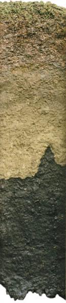 Plastiniertes Exponat des Wurzacher Hochmoors (Länge etwa 120 cm). Dieses Profil macht deutlich, wie organische Substanz in der Tiefe häufig zunehmend zersetzt ist.